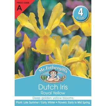 Mr Fothergill's Bulbs Dutch Iris Royal Yellow 4 Bulbs