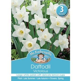 Mr Fothergill's Bulbs Daffodil Victorius 3 Bulbs