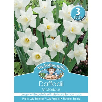 Mr Fothergill's Bulbs Daffodil Victorius 3 Bulbs