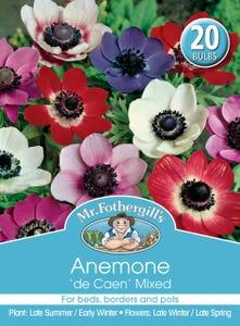 Mr Fothergill's Bulbs Anemone De Cean Mix 20 Bulbs