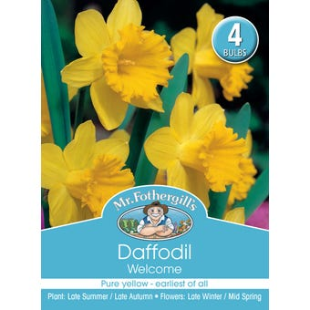 Mr Fothergill's Bulbs Daffodil Welcome 4 Bulbs