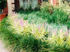 How to create a drought tolerant garden