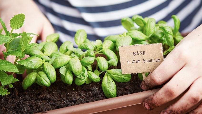 DIY grow herbs