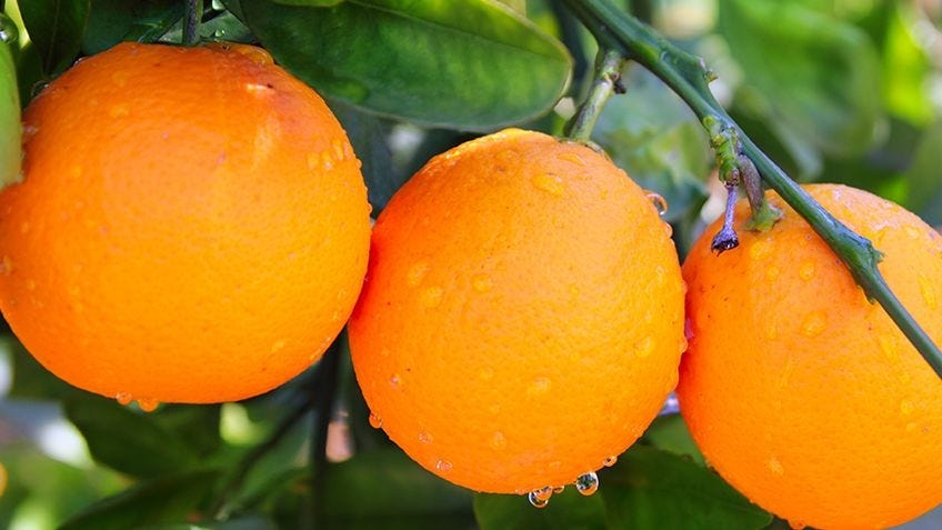 Grow healthy citrus