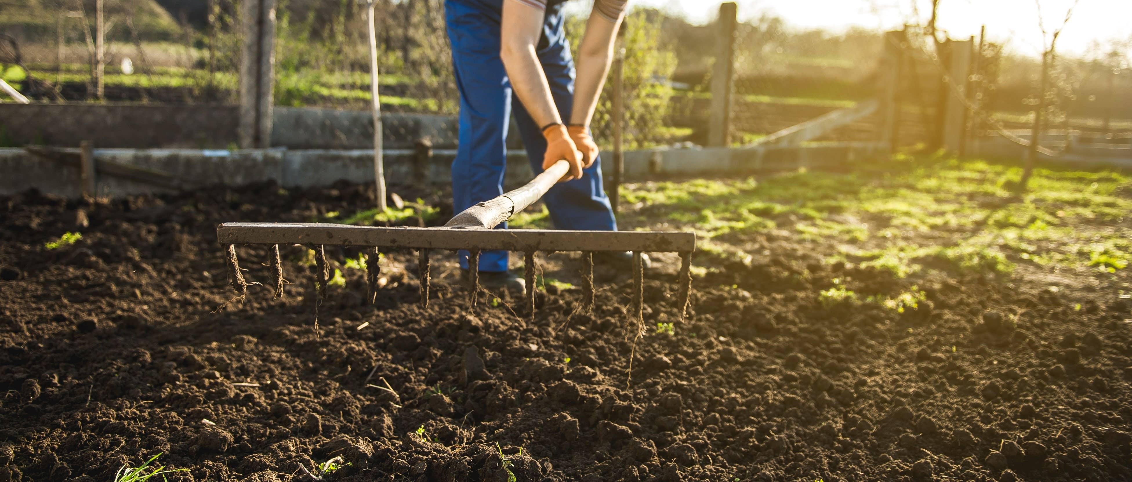 Tendering a garden soil with a rake