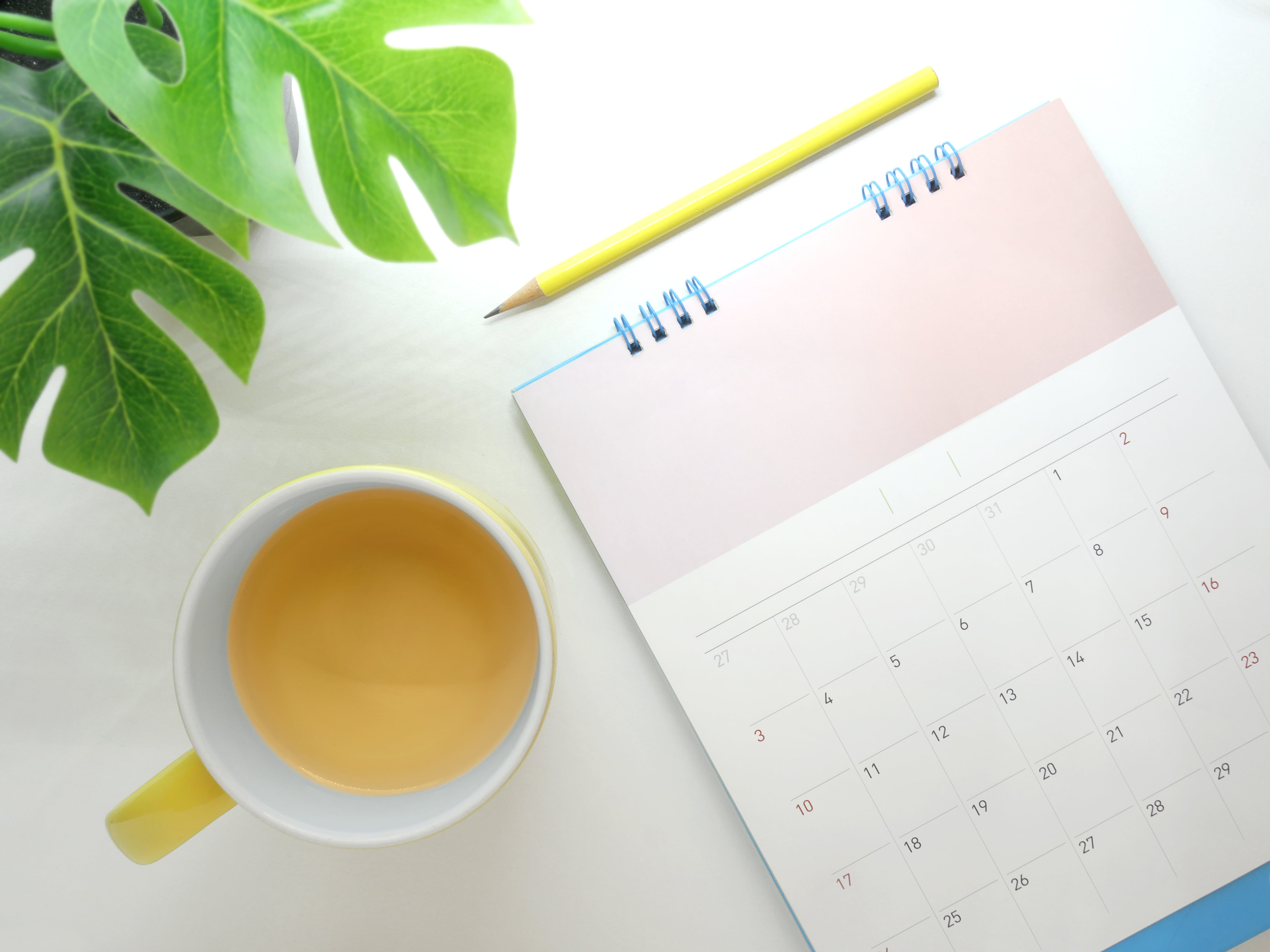 Planting Calendar with a plant on the side