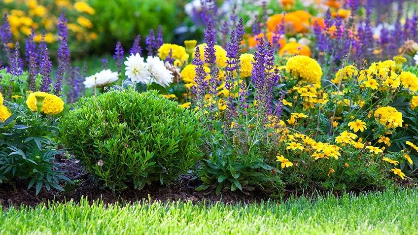 How to maintain a summer garden