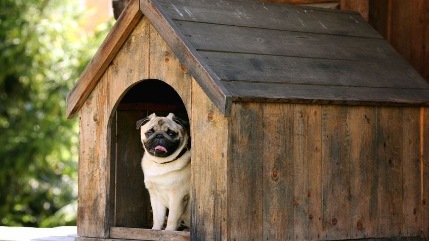 A happy dog sitting in a dog kennel