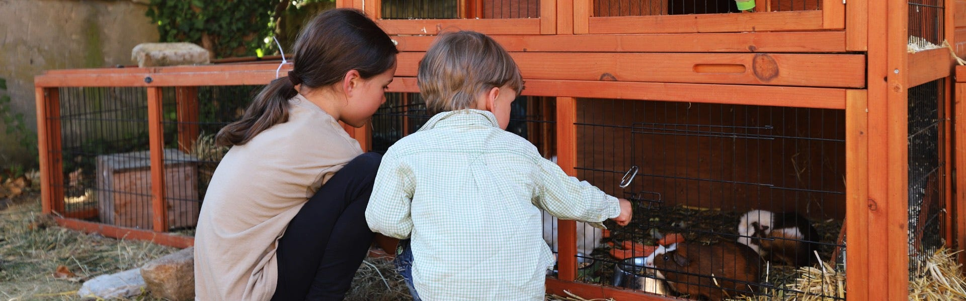 Build your own animal hutch two kids feeding guinea pigs
