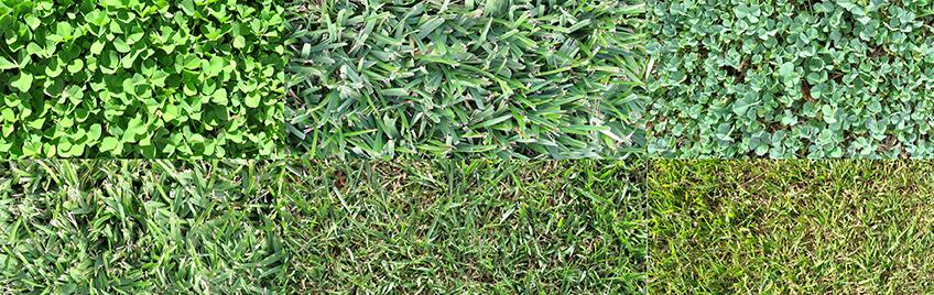 Lawn Types