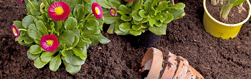 How to maintain your Summer garden | Mitre 10