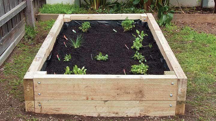 Build Your Vegetable Garden