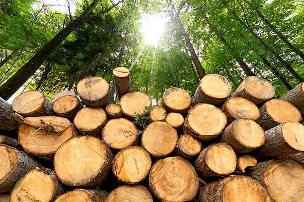 global timber shortage
